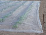 pro-fab-cropsafe-potato-plots